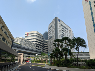 COVID-19 : Singapore's Curve May Be Flattening With Gradual …